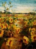 Sunflowers St. Augustine
